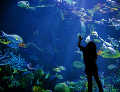 Learn All About the Animals of The New England Aquarium