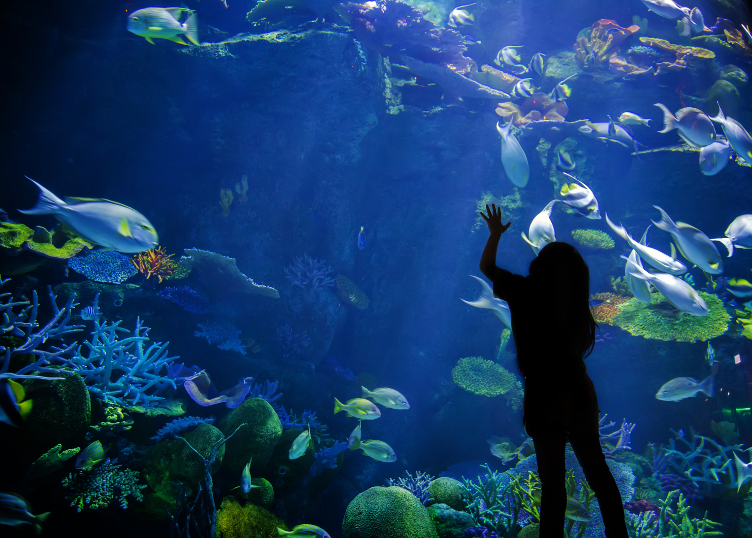 Child looking in a tank at the New England Aquarium
