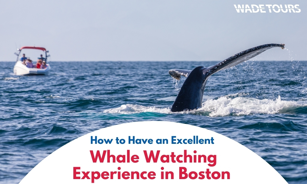 How to Have an Excellent Whale Watching Experience in Boston